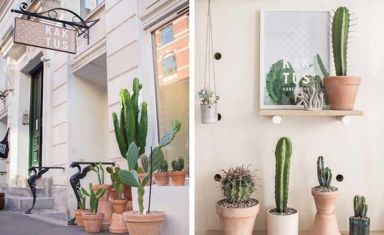 Kaktus Kobenhavn cactus