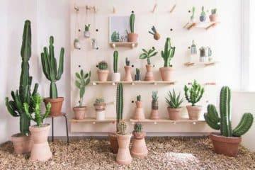 kaktus-kobenhavn-3