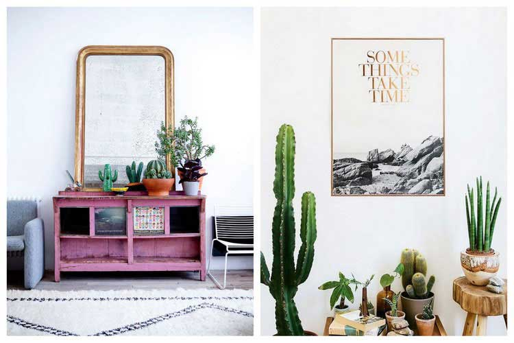 cactus inspiration deco