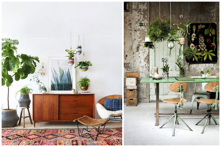 plante interieur design ln82 jornalagora. Black Bedroom Furniture Sets. Home Design Ideas