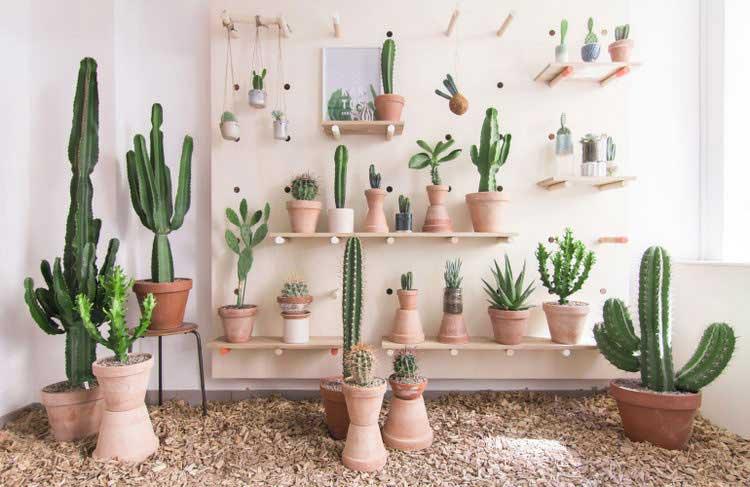 boutique cactus deco