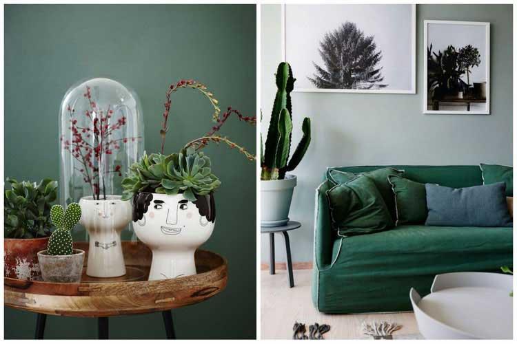 cactus deco interieur