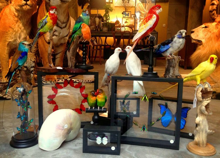 boutique taxidermie Design et Nature