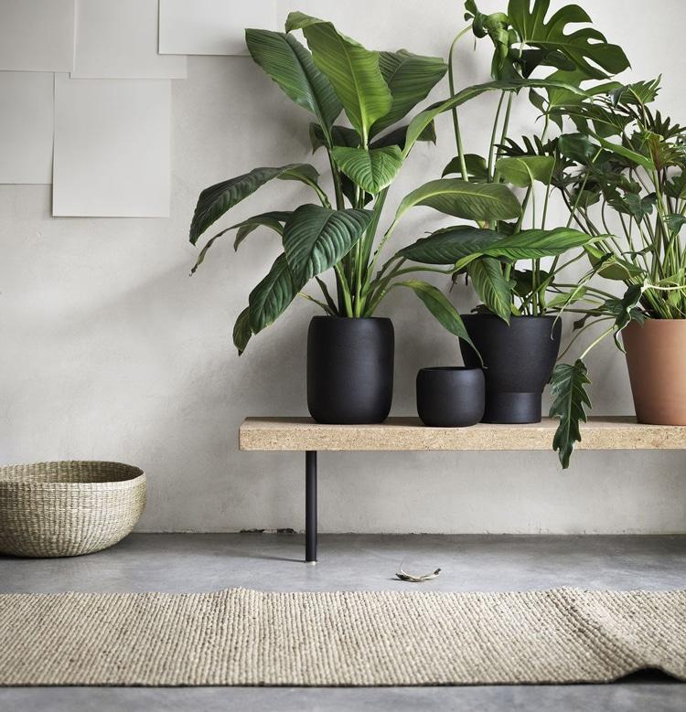 Mettre vos plantes vertes sur un banc