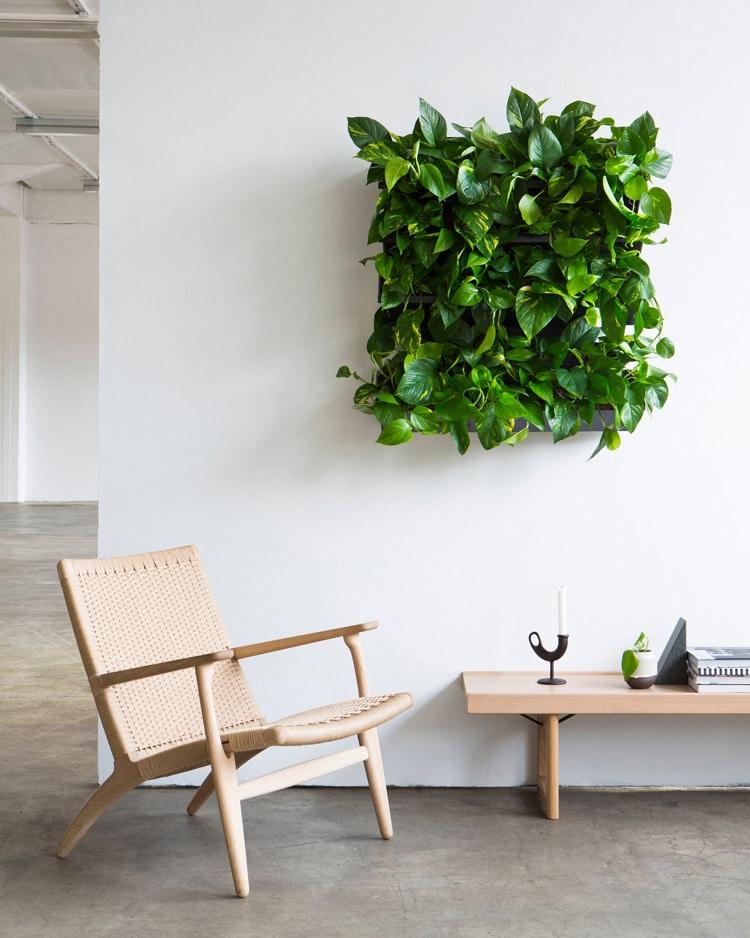 Créer un mur végétalisé intérieur