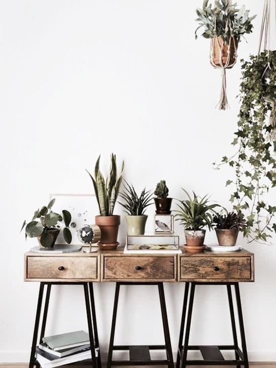 Disposer vos plantes sur une console d'entrée