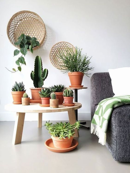 Plantes sur table basse