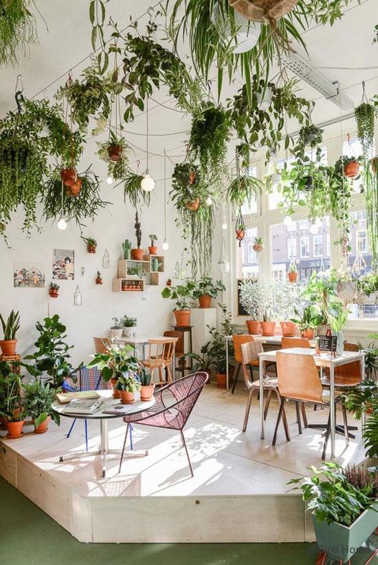 Une suspension pour une plante d'intérieur