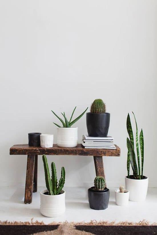 plantes sur un banc vintage
