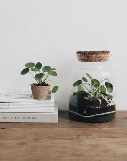 Un terrarium pour se créer un jardin d'hiver à la maison