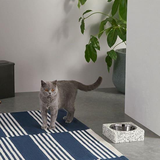 Accessoires pour animaux : la gamelle en terrazzo