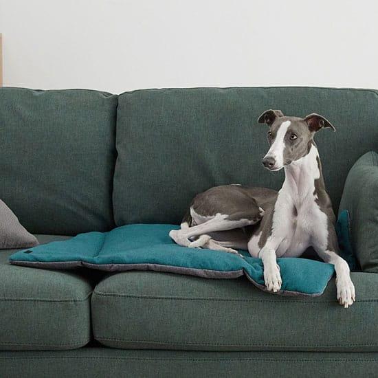 Accessoires pour animaux utile : le tapis de protection pour canapé