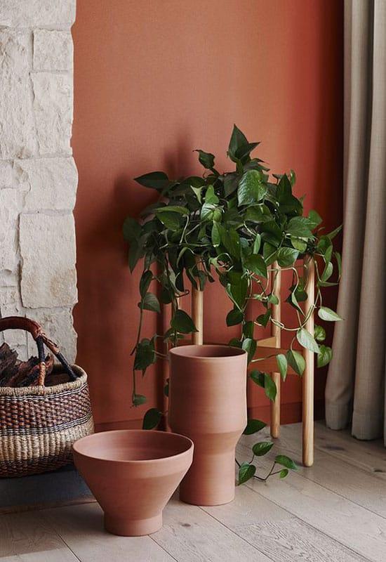 Plantes vertes sur mur terracotta