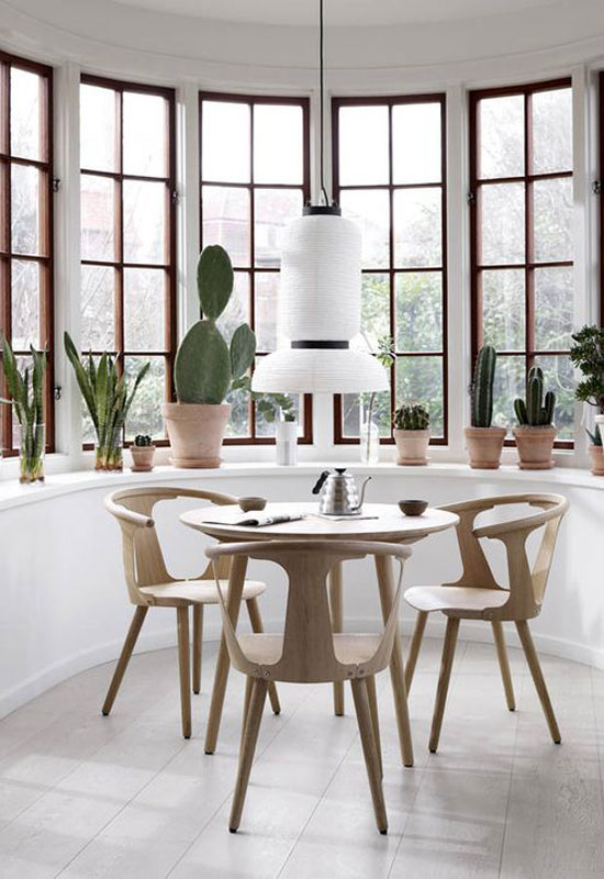 Cactus en pot comme décor de salle à manger