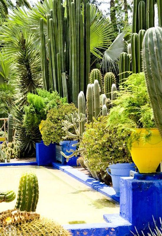 Cactus géants au jardin