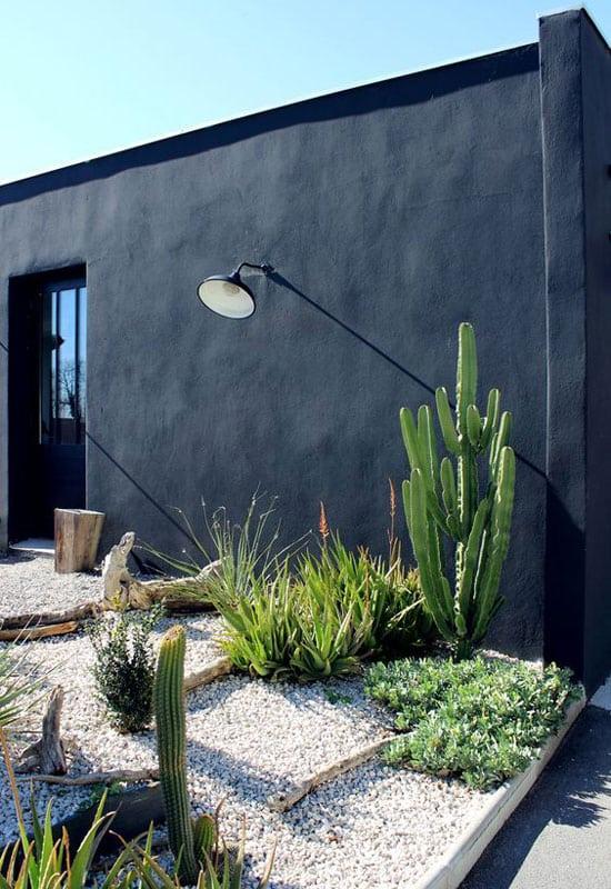 Jardin galet et cactus