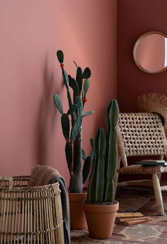 Décoration thème cactus mexicain