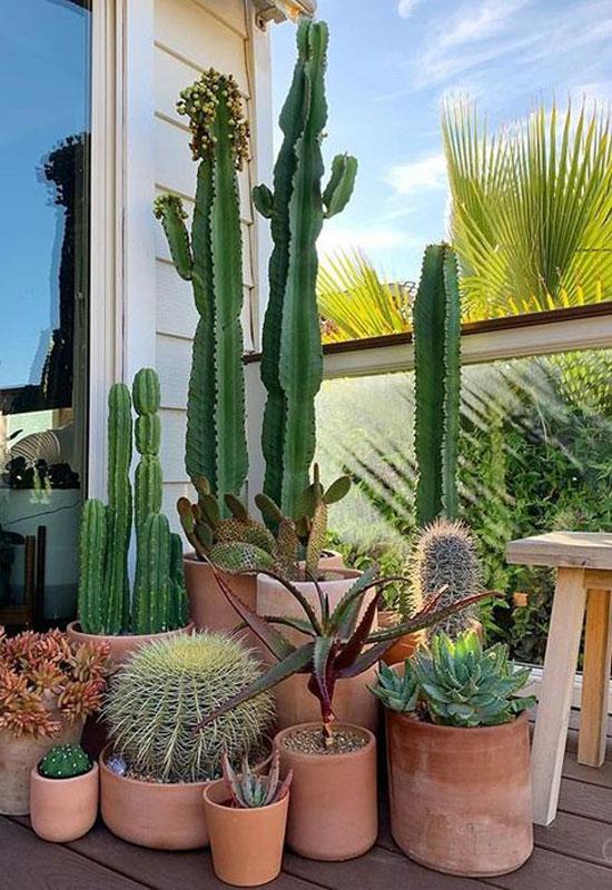 Cactus sur balcon